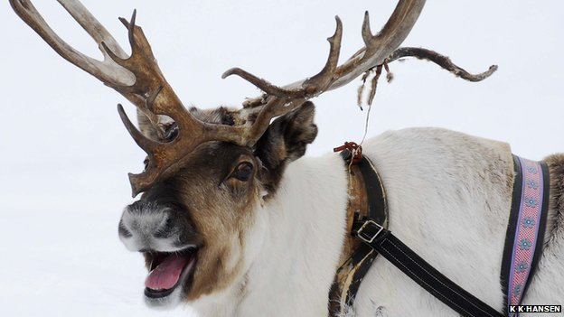 happy-reindeer