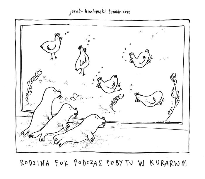 kury_foki