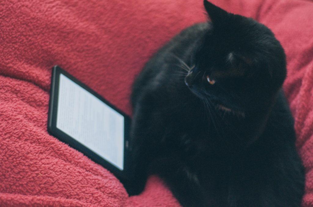 Kocham koty serwis randkowy